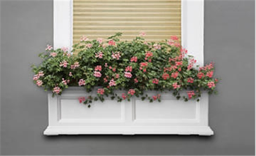 36 inch window box
